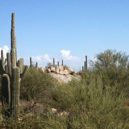 Sonora Wüste, Arizona