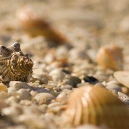 Muscheln auf Sanibel Island
