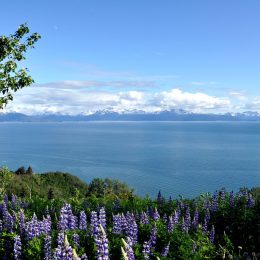 Blick über Cook Inlet zur Alaskan Range