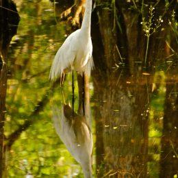 Sumpflandschaft in den Everglades