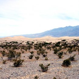 Sanddünen im Death Valley Nationalpark
