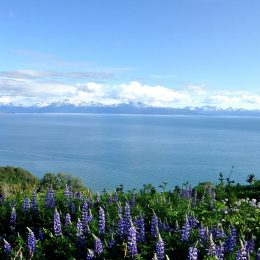 Panorama am Cook Inlet