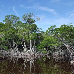 Die Landschaft in den Everglades