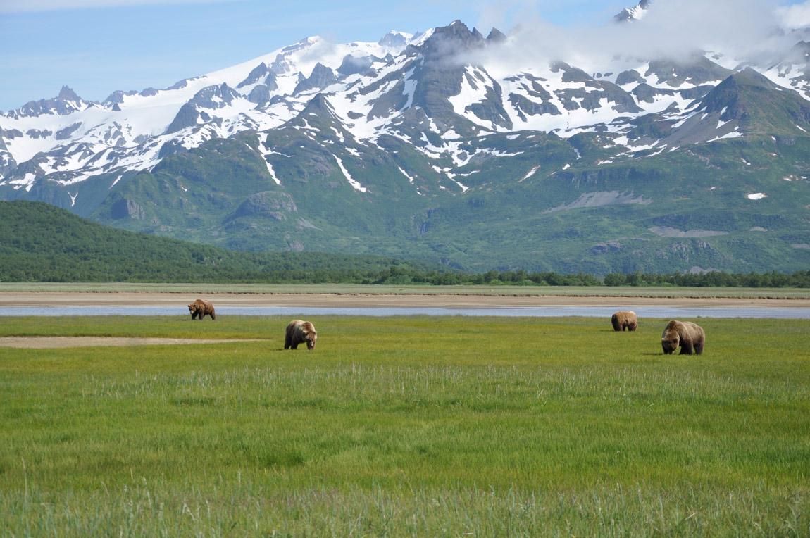 das Erlebnis - eine Gruppe von Bären im Katmai National Park, Alaska