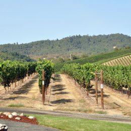 Roseburg, Abacela - ein bekannter Weinbaubetrieb