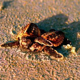 Schildkrötenzeit