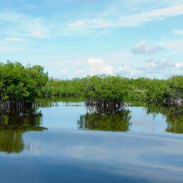 Everglades Tour Fort Myers Florida