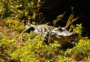 Everglades National Park: Die Weltklasse-Sümpfe