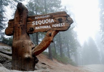 Kings Canyon & Sequoia National Park