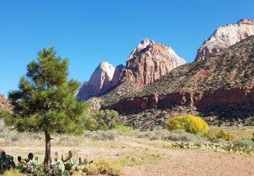 Zion National Park: Das legendärste Naturwunder Utahs