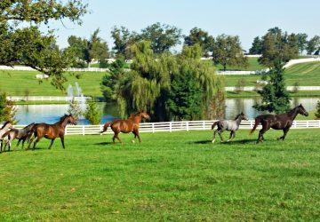 Kentucky - Pferdestärken und Bluegrass