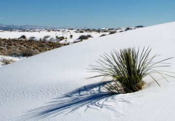 White Sands National Monument: In der weißen Wüste