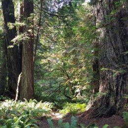 durch Absonderungen der Bäume gibt es keine Insekten